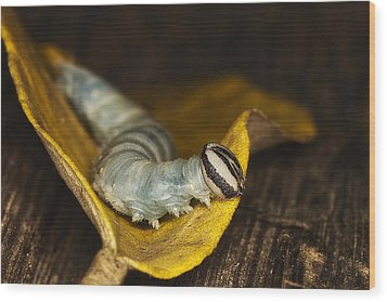 Wood Print featuring the photograph Twinkle Toes 02 by Kevin Chippindall