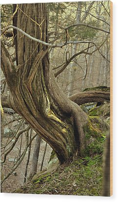 Twisted Cedar Wood Print by Marty Koch
