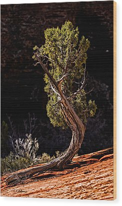Twisted Reach Wood Print by Christopher Holmes