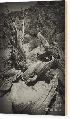 Wood Print featuring the photograph Twisted Wood by Linda Constant