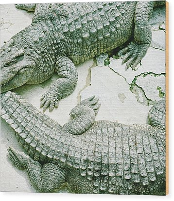 Two Alligators Wood Print by Yasushi Okano