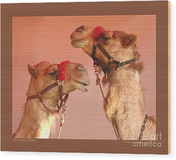 Two Circus Camels Wood Print by Patricia Overmoyer