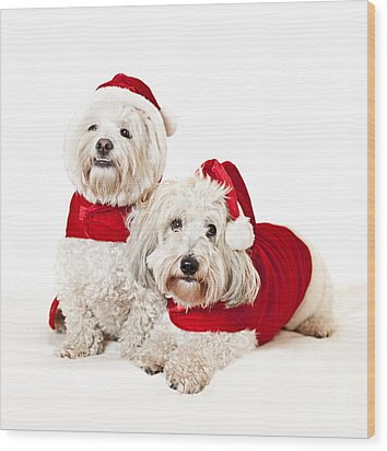 Two Cute Dogs In Santa Outfits Wood Print by Elena Elisseeva