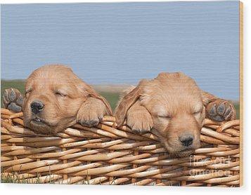 Two Cute Puppies Asleep In Basket Wood Print by Cindy Singleton