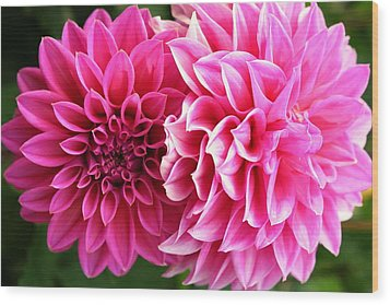 Wood Print featuring the photograph Two Dahlias In Shades Of Pink by Laurel Talabere