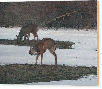 Two Deer Grazing Wood Print by Cedric Hampton