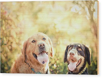 Two Dogs Wood Print by Jessica Trinh