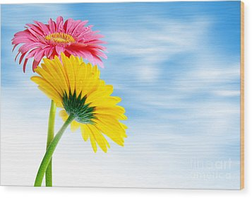 Two Gerberas Wood Print by Carlos Caetano