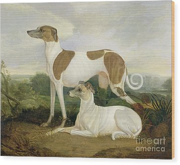 Two Greyhounds In A Landscape Wood Print by Charles Hancock