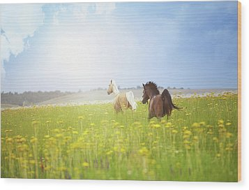 Two Horses Wood Print by Arman Zhenikeyev - professional photographer from Kazakhstan