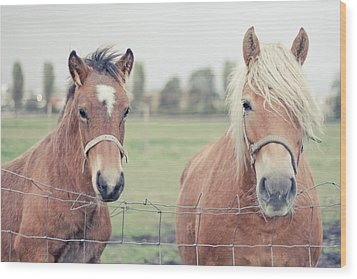 Two Horses Behind A Wired Fence Wood Print by Cindy Prins