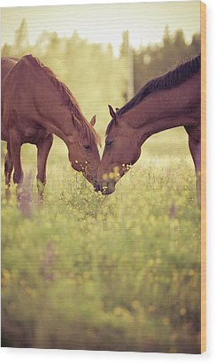 Two Horses In Field Wood Print by Stefan Sager