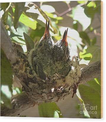 Two Hummingbird Babies In A Nest 3 Wood Print by Xueling Zou