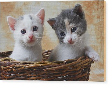 Two Kittens In Basket Wood Print by Garry Gay