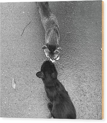 Two Kittens Which Kiss Wood Print by photographer, loves art, lives in Kyoto