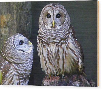 Two Little Owls Wood Print