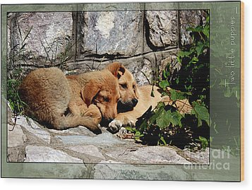 Two Little Puppies Wood Print by Melania Sherdenkovska