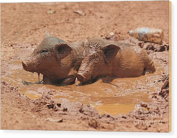 Two Pigs In A Puddle Wood Print by Nola Lee Kelsey