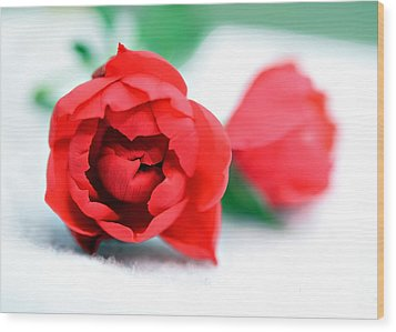 Two Rose Buds Wood Print by Susan Leggett