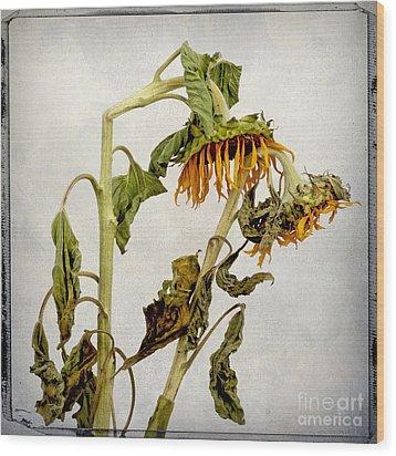 Two Sunflowers Wood Print by Bernard Jaubert