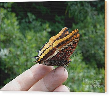 Wood Print featuring the photograph Two Tailed Pasha by Lainie Wrightson