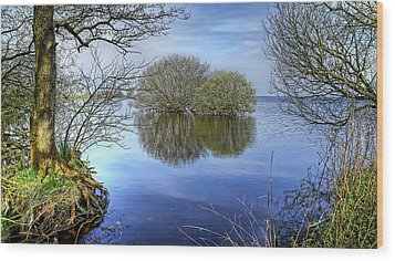Two Watery Trees  Wood Print by Kim Shatwell-Irishphotographer