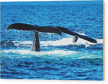 Two Whale Tails Wood Print by Paul Ge