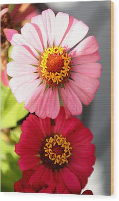 Wood Print featuring the photograph Two Zinnias In The Shade by Paula Tohline Calhoun