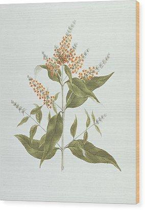 Umtar - Buddleia Polystachya Wood Print by James Bruce