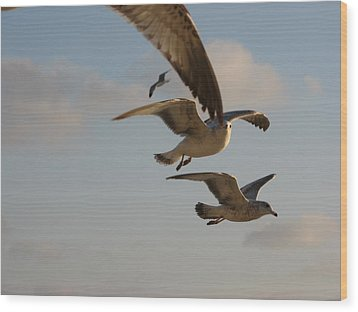 Wood Print featuring the photograph Under His Wings by Jan Cipolla