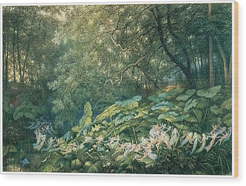 Under The Dock Leaves Wood Print by Richard Doyle