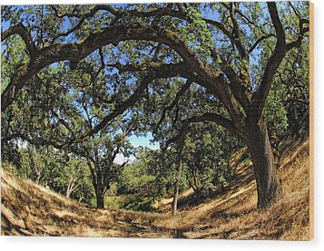 Under The Oak Canopy Wood Print by Donna Blackhall