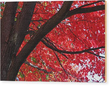 Under The Reds Wood Print by Rachel Cohen