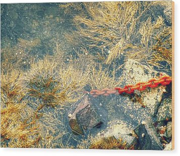 Wood Print featuring the photograph Under The Sea by Kelly Reber
