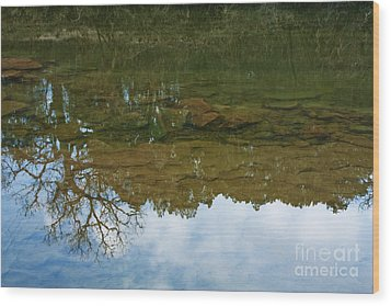 Underwater Landscape Wood Print by Lisa Holmgreen
