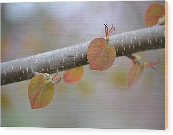 Wood Print featuring the photograph Unfurling Buds In The Heart Of Spring by JD Grimes