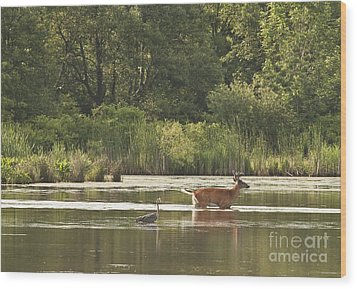 Wood Print featuring the photograph Unusual Pair  by Jeannette Hunt