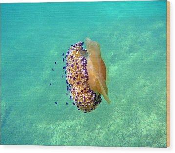 Unwelcome Jellyfish Wood Print by Rod Johnson