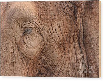 Up Close And Personal Wood Print by Mary Mikawoz