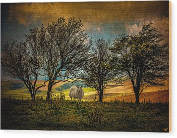 Wood Print featuring the photograph Up On The Sussex Downs In Autumn by Chris Lord