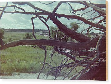 Wood Print featuring the photograph Uprooted by Bonfire Photography