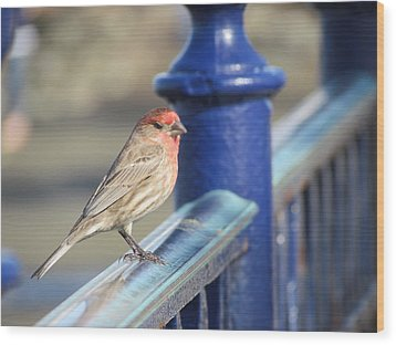 Urban Sparrow Wood Print by Bonnie Muir