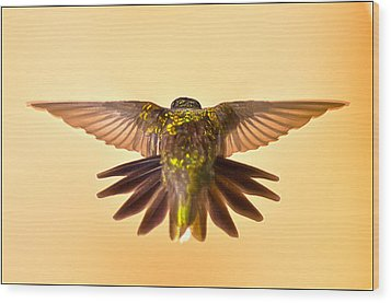 Wood Print featuring the photograph Usaf Hummingbirds Wings by Randall Branham