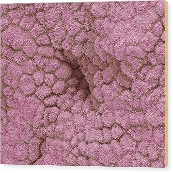 Uterus Lining, Sem Wood Print by Steve Gschmeissner
