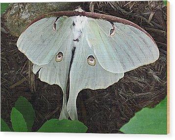 Va Moth Wood Print