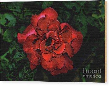Valentine Rose Wood Print by Mariola Bitner