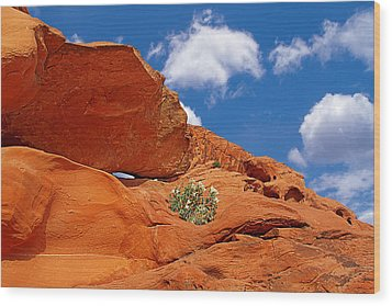 Valley Of Fire - Adventure In Color And Beauty Wood Print by Christine Till