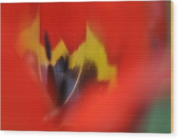 Wood Print featuring the photograph Variegated Tulip by Rob Hemphill