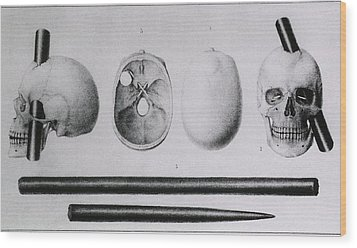 Various Views Of The Famous Wound Wood Print by Everett