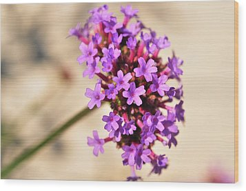 Wood Print featuring the photograph Verbena  by Puzzles Shum